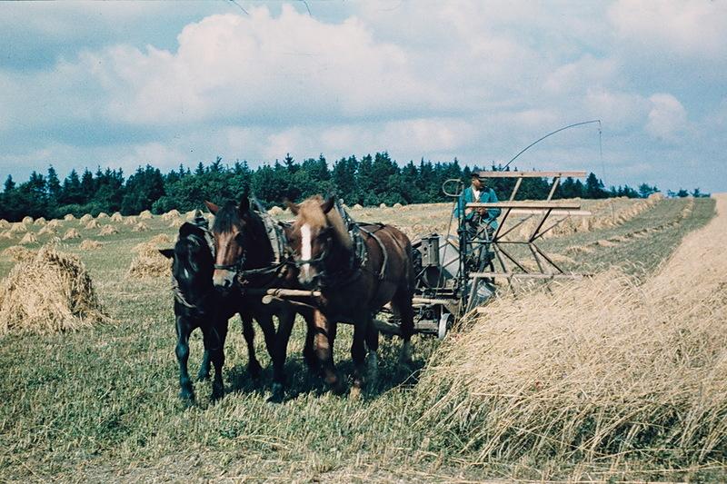 Landwirtschaft Mecklenburg Vorpommern