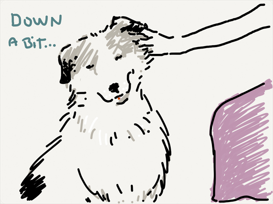 dog says down a bit