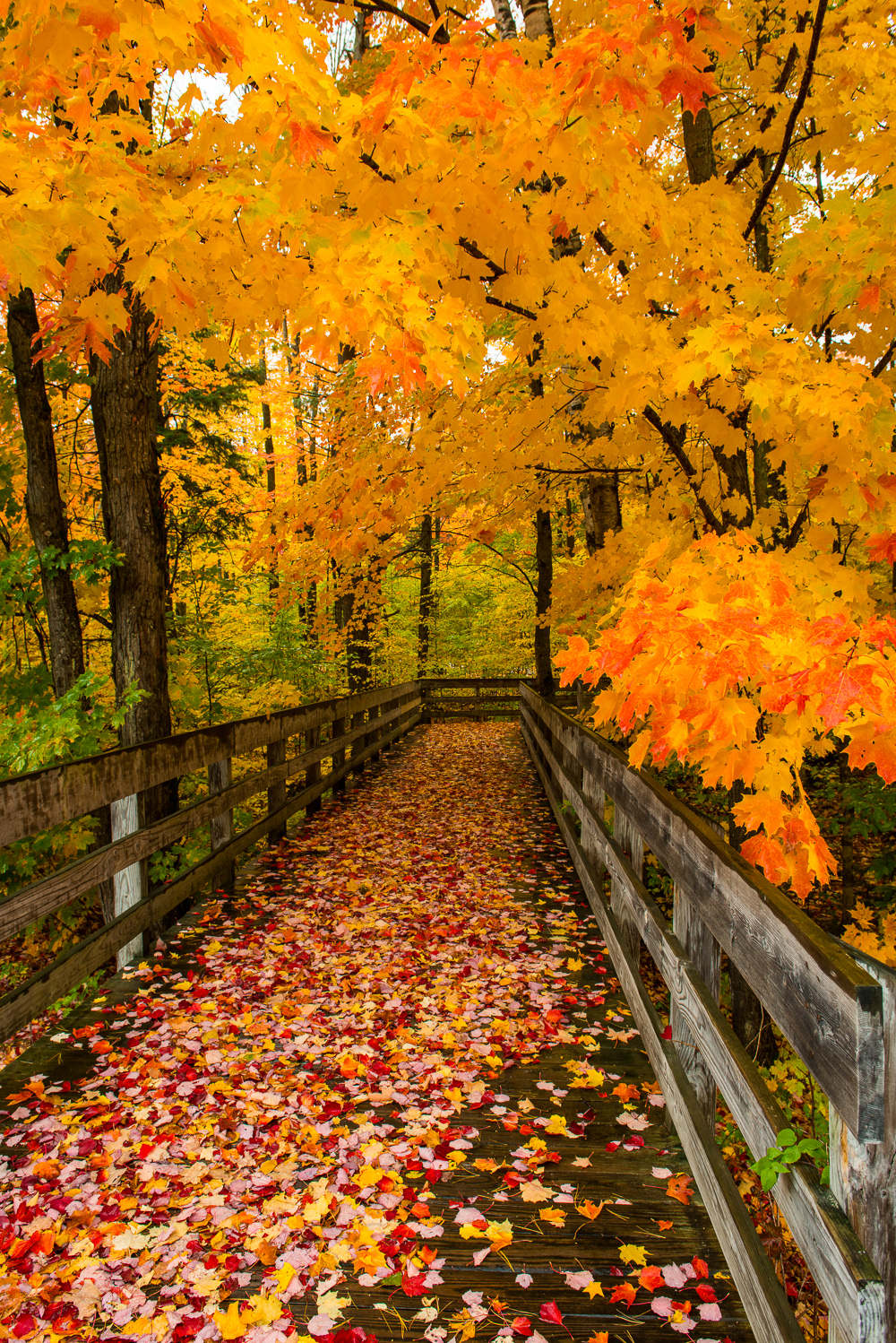 6 Fall Street Style Trends: Steve Q Photo: Michigan Fall Color 2012 Day 1 Grayling