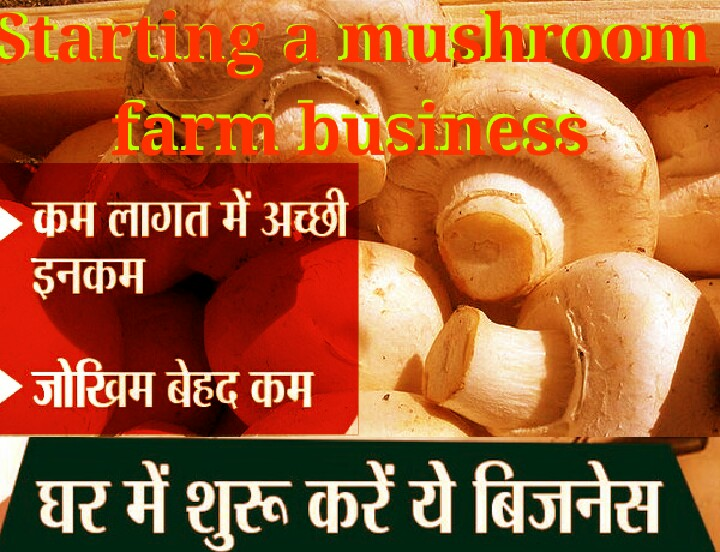 Starting a Mushroom Farming Business in 6 Easy Steps Growing Oyster Mushrooms
