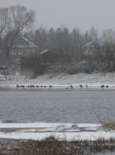 утки садятся на воду для отдыха