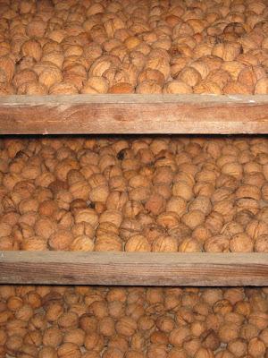 Perigord walnuts