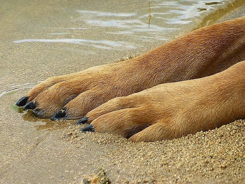 Fieggentrio Gedicht Bij Het Verlies Van Je Hond