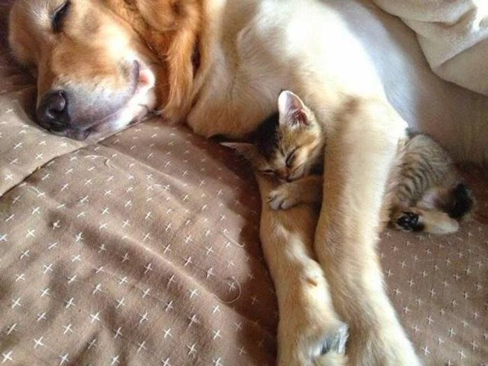 Funny animals of the week - 14 October 2016, cute animal photos