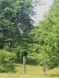un joli souvenir d'été dans un jardin - cueillette de fruits