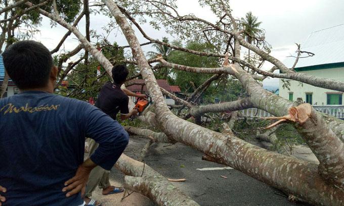 FOTO: Angin Kencang Tumpangkan Pohon di Mappesangka