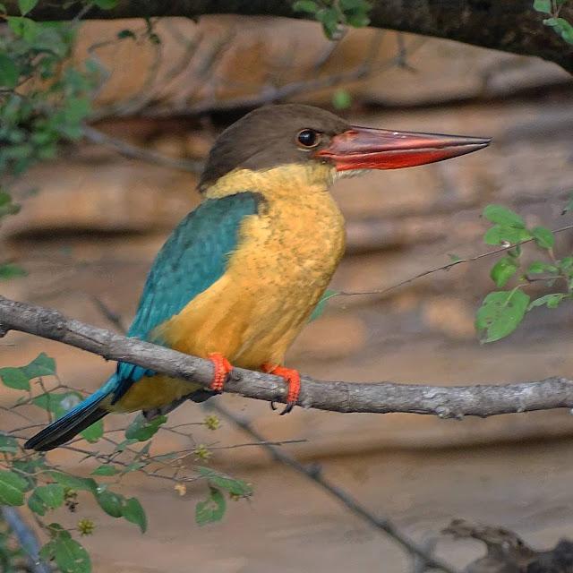 Birding in Kota