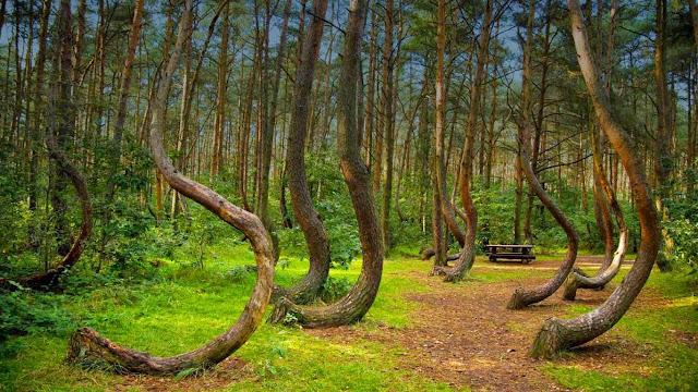 hutan Hoia Baciu di rumania adalah hutan angker yang paling menyeramkan dan menakutkan di dunia