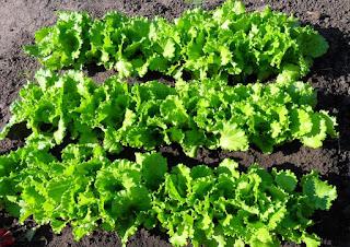 Осенний салат, 8 сентября