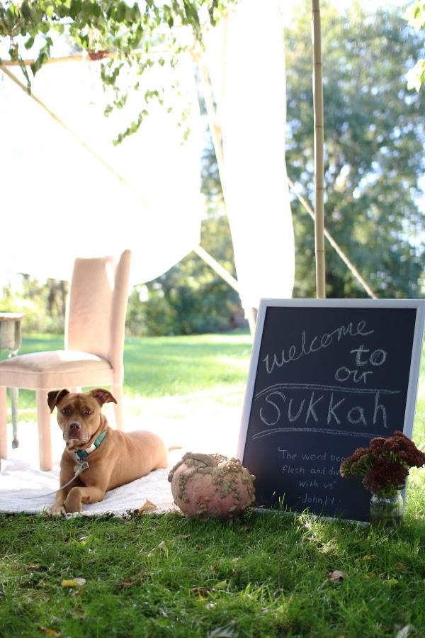 All dogs go to Sukkot | Land of Honey