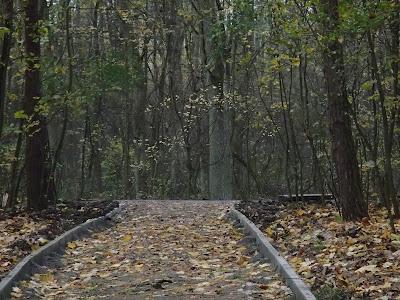 listopad w lesie, grzyby w listopadzie, pierwszy listopada