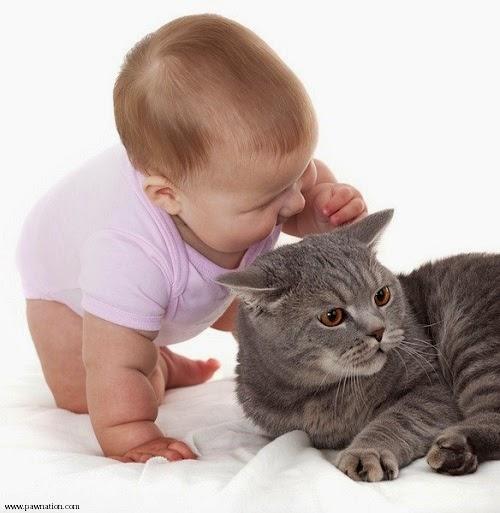 Photo chat avec Bébé mignon