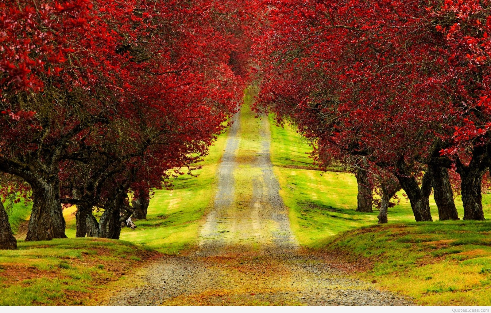 download red trees autumn road beautiful hd wallpaper 3d hd nature tree wallpaper download for pc android mobile wallpapers windows 7 name animation