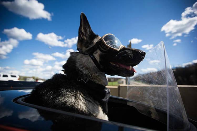 Δείτε στο βίντεο τι έφτιαξε ένας μοτοσικλετιστής για παίρνει το σκύλο του βόλτα με τη μηχανή