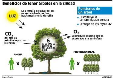 Benificio de los árboles