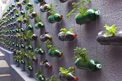 Muro aprovechado para cultivar verduras.