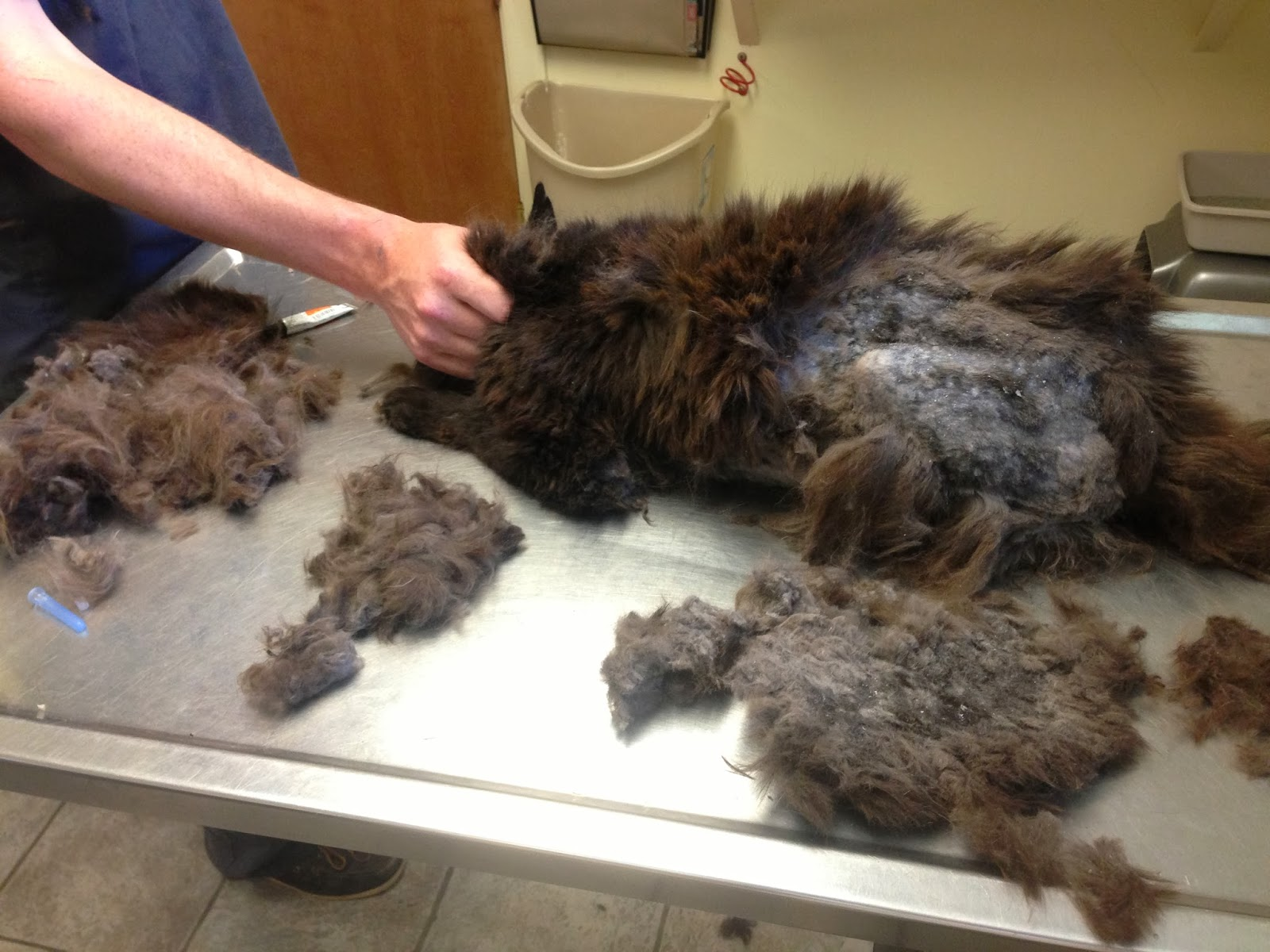 Number 3 Matting Hair For Many Cats