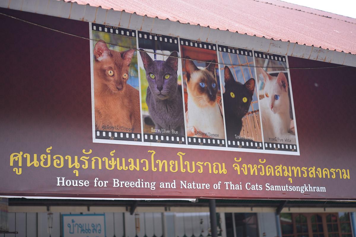 ผลการค้นหารูปภาพสำหรับ บ้านแมวไทยโบราณ อัมพวา   สมุทรสงคราม