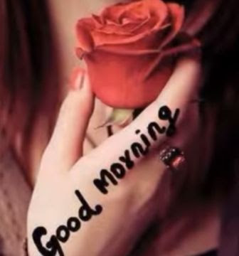 Good morning images for whatsapp - rose