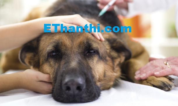 குழந்தையை கடித்த நாய்க்கு மரண தண்டனை | The death of a dog bitten by a child !