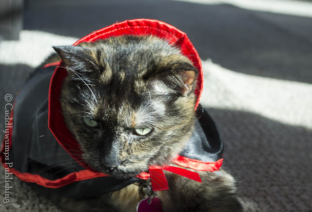 Real Cat Paisley in her Dracula cape