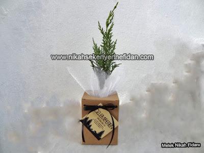 Özlem Eren nikah bitkisi fidanı 3