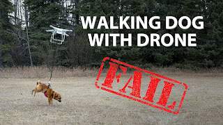 dog walking fail