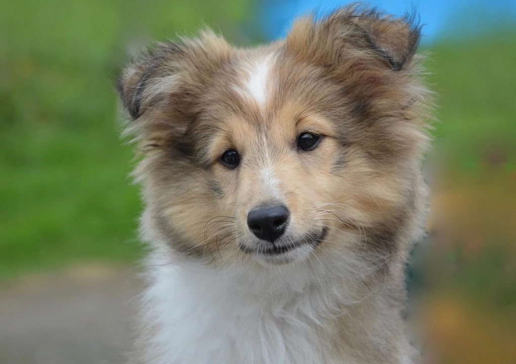 9 Best Medium Sized Dog Breeds The Buzz Land