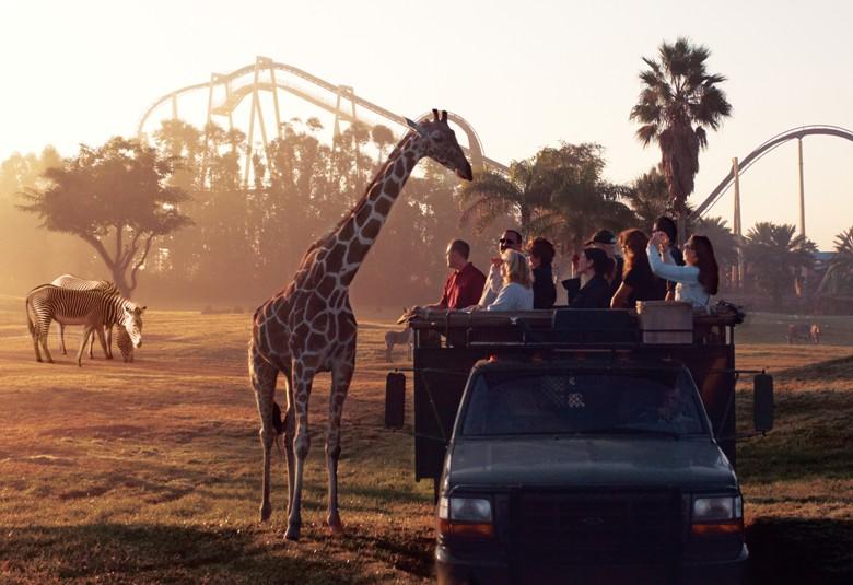 SERENGETI SAFARI EXPERIENCE - Busch Gardens Tampa Bay