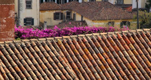 flowers on the roof