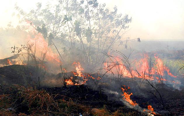 Resultado de imagem para Mais de quatro mil incêndios são registrados no Maranhão