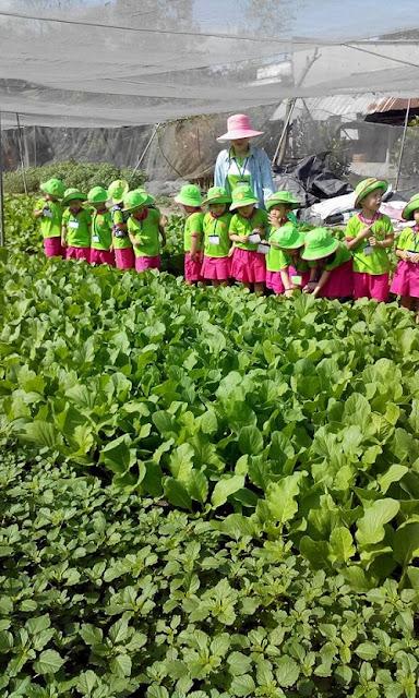 Vườn rau sạch HB nơi dành cho học sinh tham quan