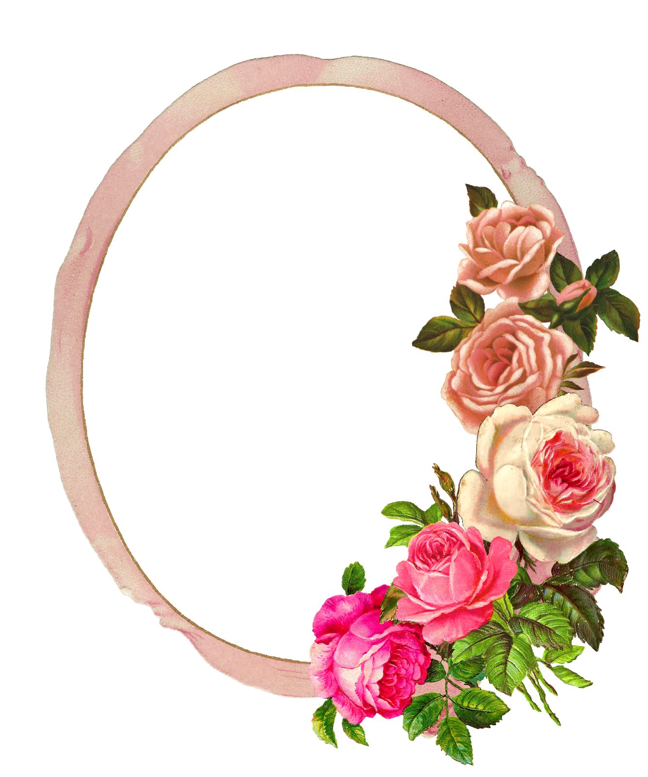 The graphics monarch free pink rose digital flower frame for Free rose garden designs