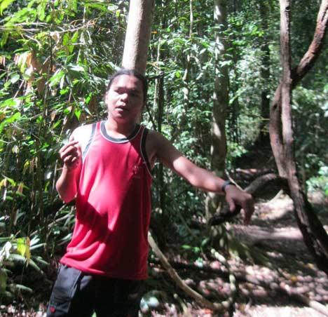 trekking ke taman nasional gunung leuser