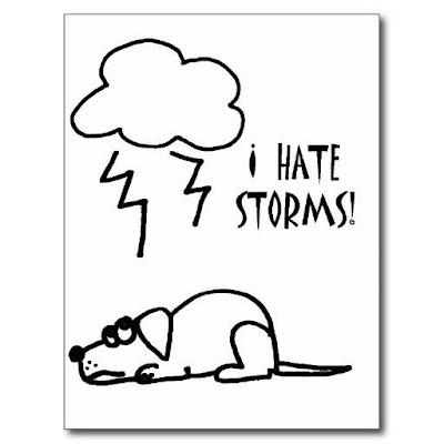 Cảm nhận của loài chó về thời tiết