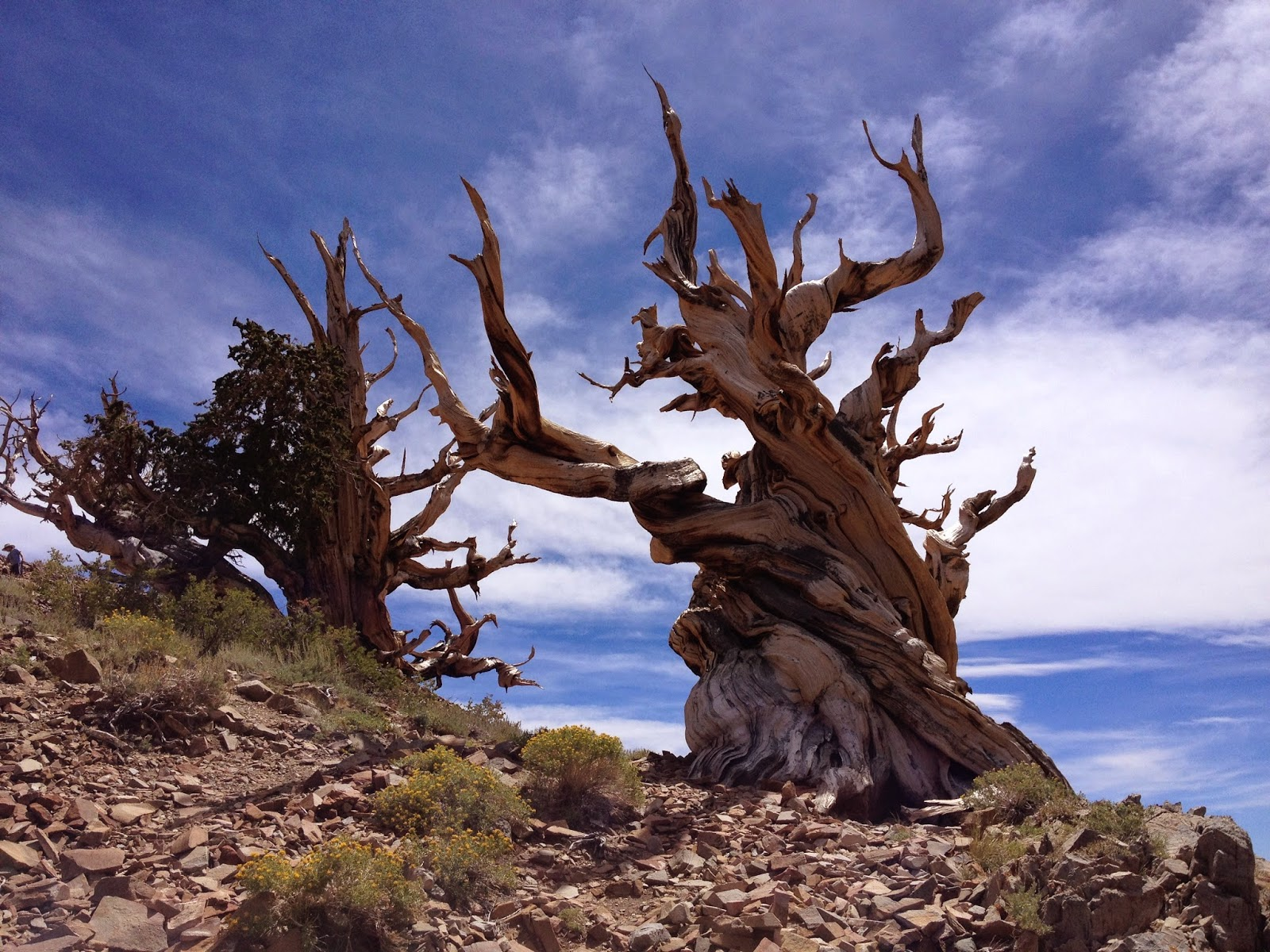 Our Hiking Mystery Ancient Bristlecone Pine Forest