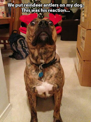 Funny dog pictures ; Your dog looks like a reindeer