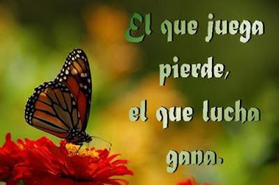 imagen mariposa+rindas