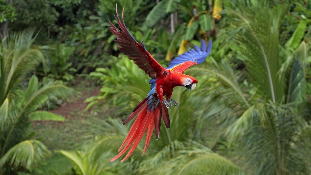 Parrot Flying HD Wallpaper
