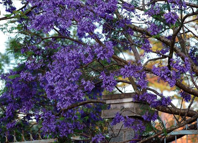 Beautiful flowers seasons in Dalat 2