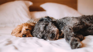 https://www.fomobones.com/blog/tips-for-curing-insomnia-in-dogs/