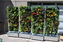 Plants Walls Vertical Garden Systems Conservation