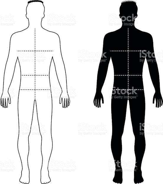 Fashion Man Outlined Template Figure Silhouette With Marked Body  Royaltyfree Stock Vector Art