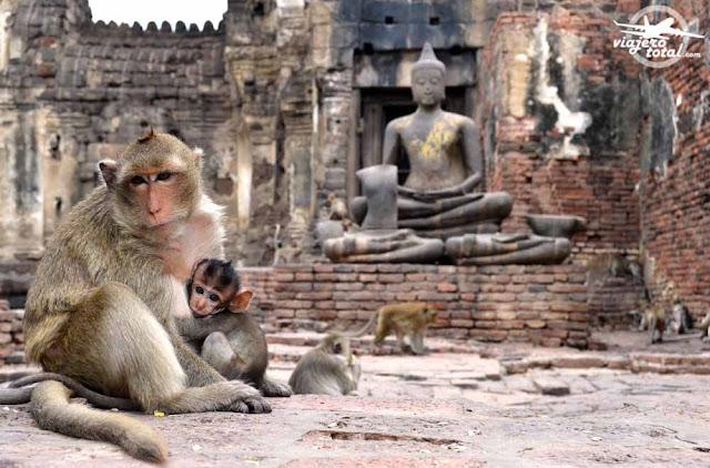 Templo de los monos de Lopburi - Tailandia