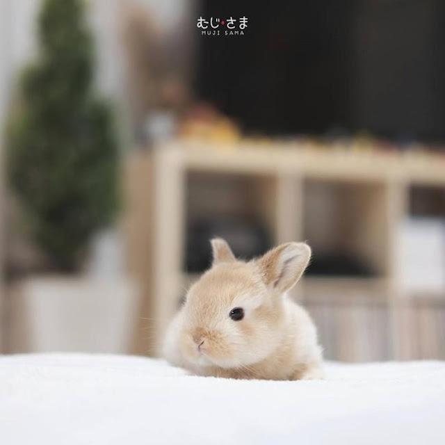 Gia đình nhỏ với trai đẹp, một em cún lúc nào cũng cười và hai chú thỏ lông xù siêu đáng yêu