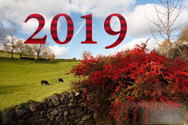 hình nền chúc mừng năm mới 2019