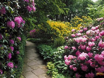 Resultado de imagen de Mes de mayo flores