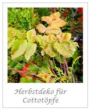 Herbst in den Cottotöpfen