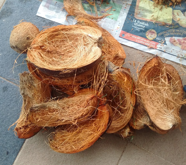 gardening, coconut flower pots, orchids, flower pot, hanging flower pots, gardening crafts ideas, gardening recycle, coconut husks, moist flower for longer period