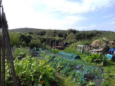 Saturday On The Allotment - Late Summer Growing